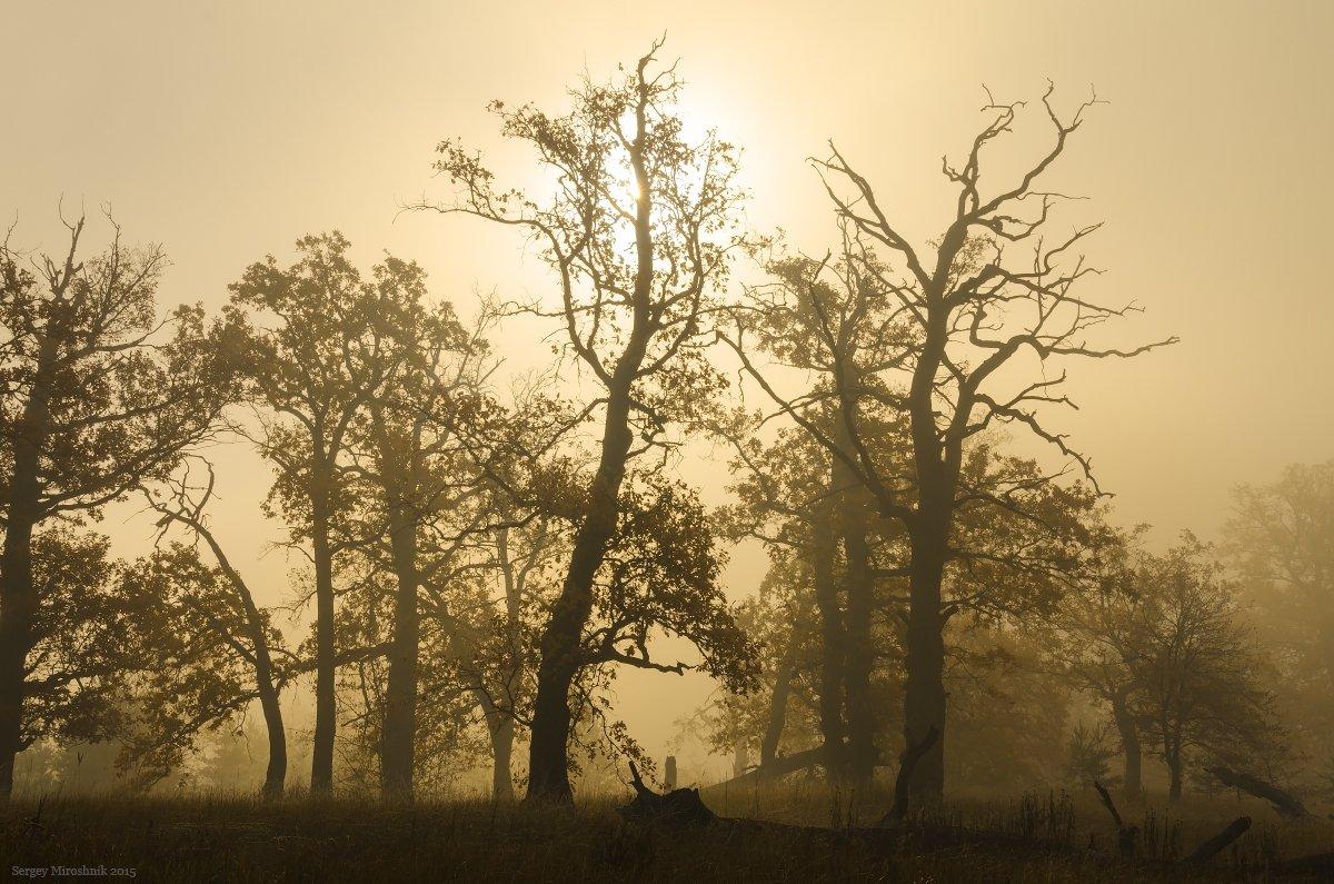 пейзаж, природа, лес, осень, солнце, утро, октябрь, дуб, туман, роща, украина, Сергій Мірошник