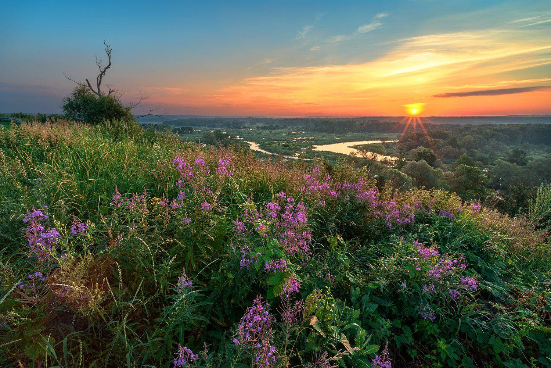 утро,рассвет,река,холмы,зелёная трава,цветы, Соколов Андрей