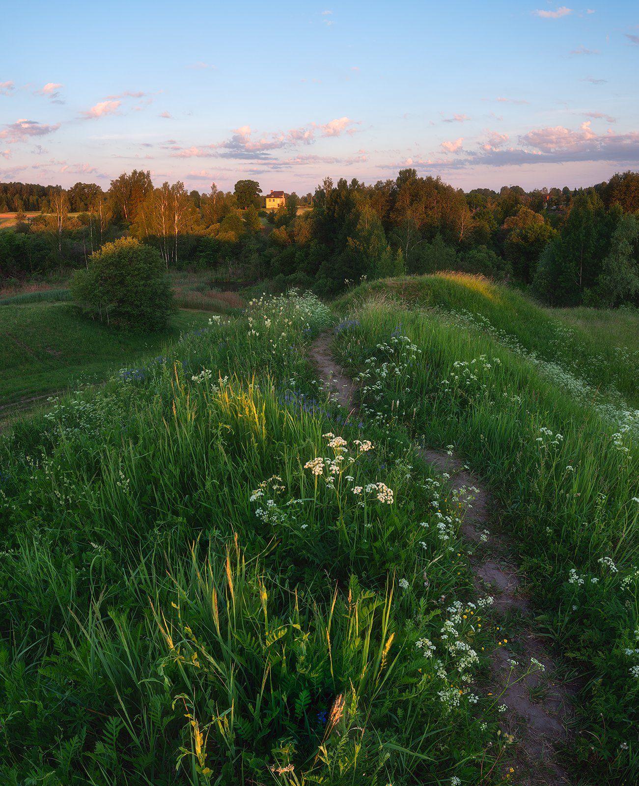 пейзаж, поле, утро, лето, зелень, трава, рассвет, Алексей Мельситов