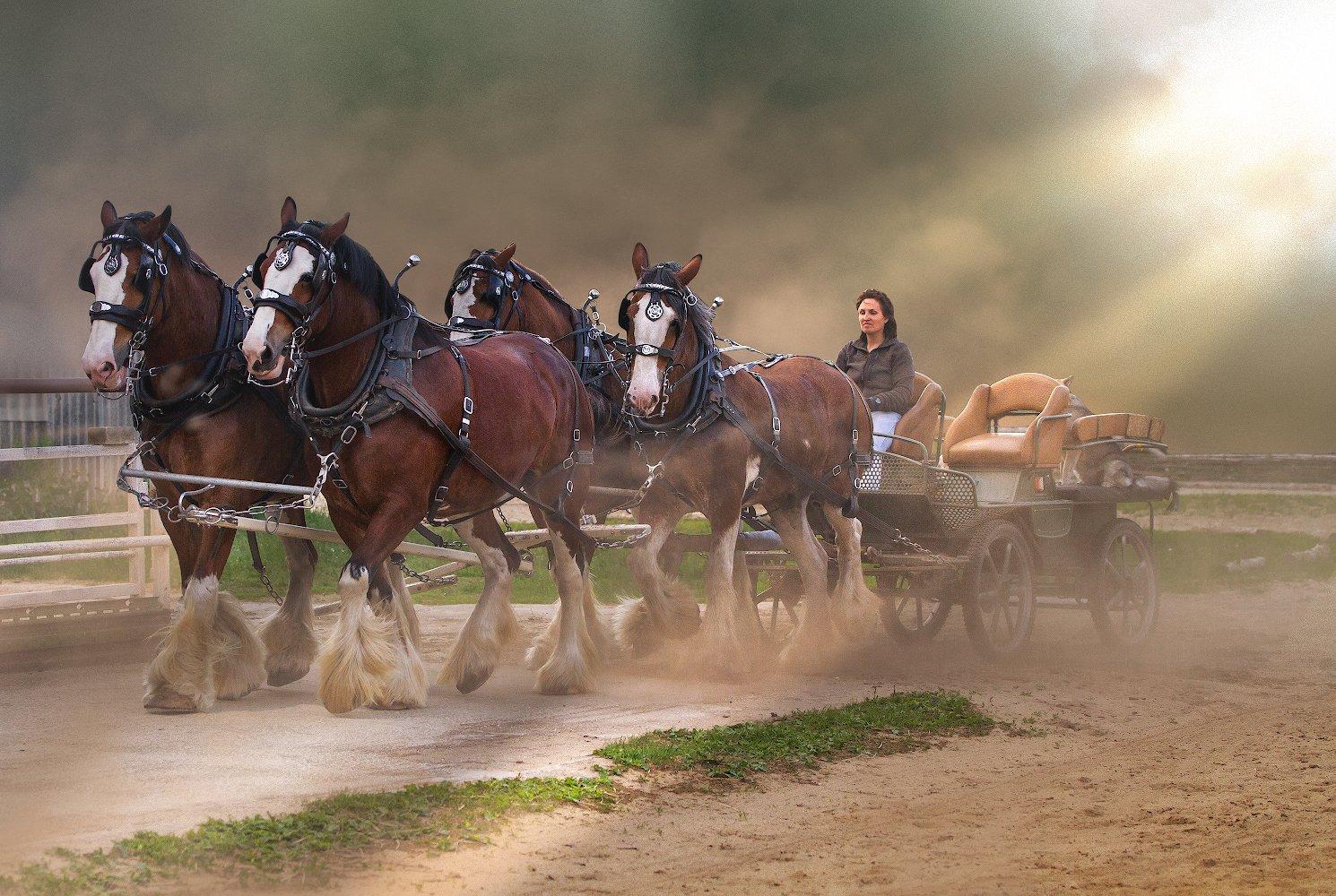 лошадь упряжка клейдсейдаль, Игорь Шиленок