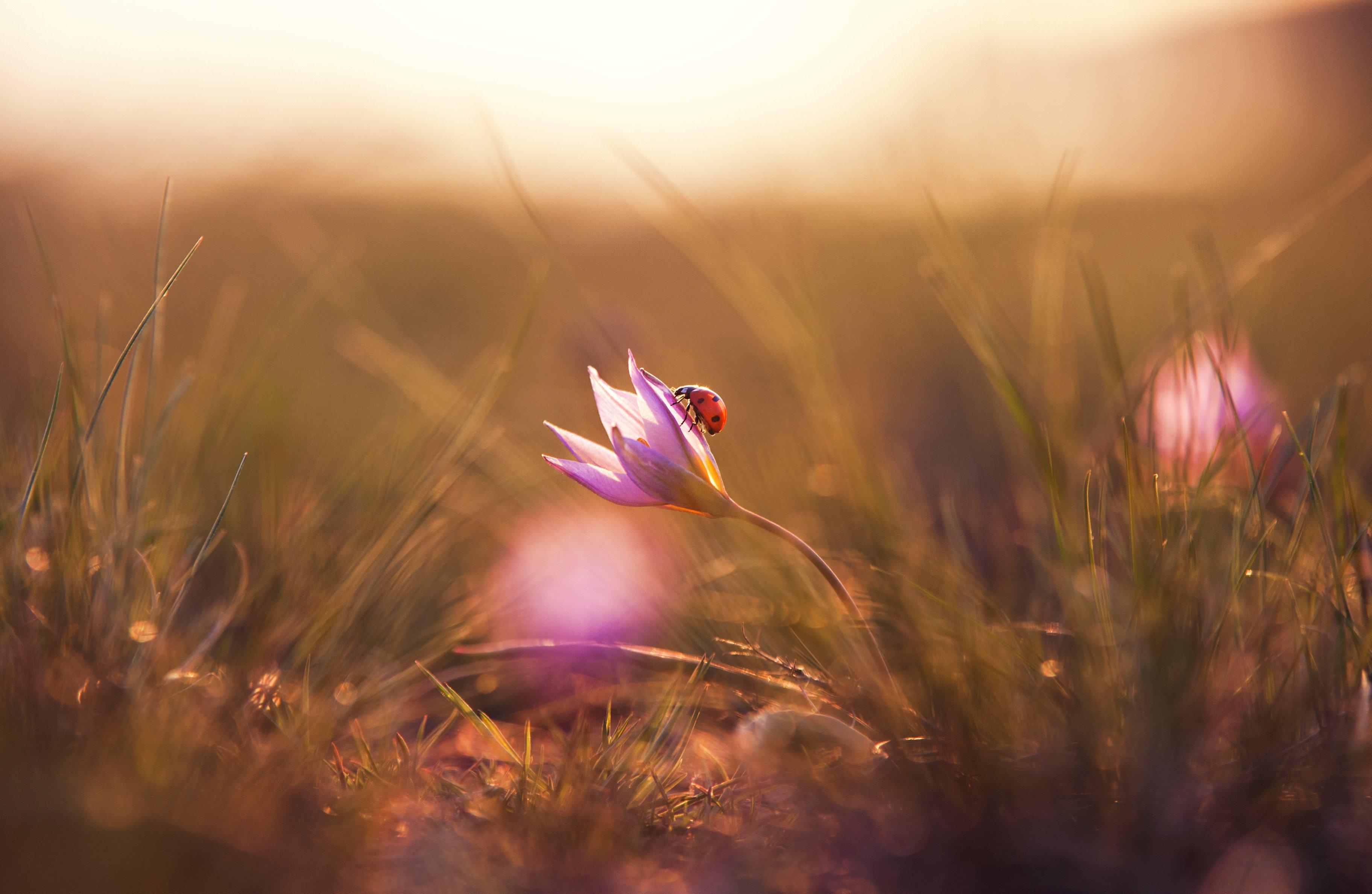 жук, коровка, цветок, весна, лучи, тепло, Логачёв Илья