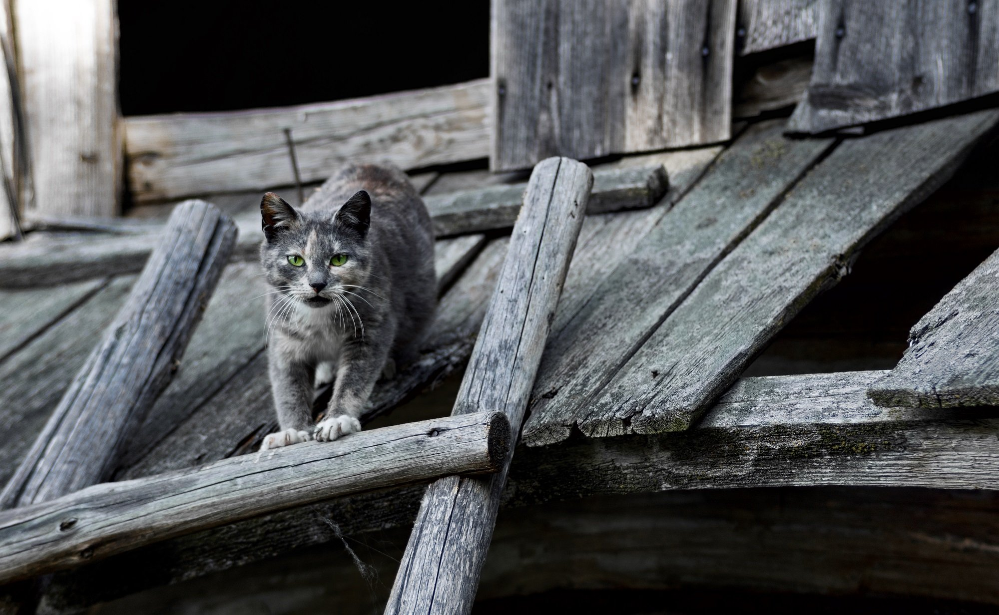 кошки, деревня, беларусь, весна, Sixten ( Сергей )