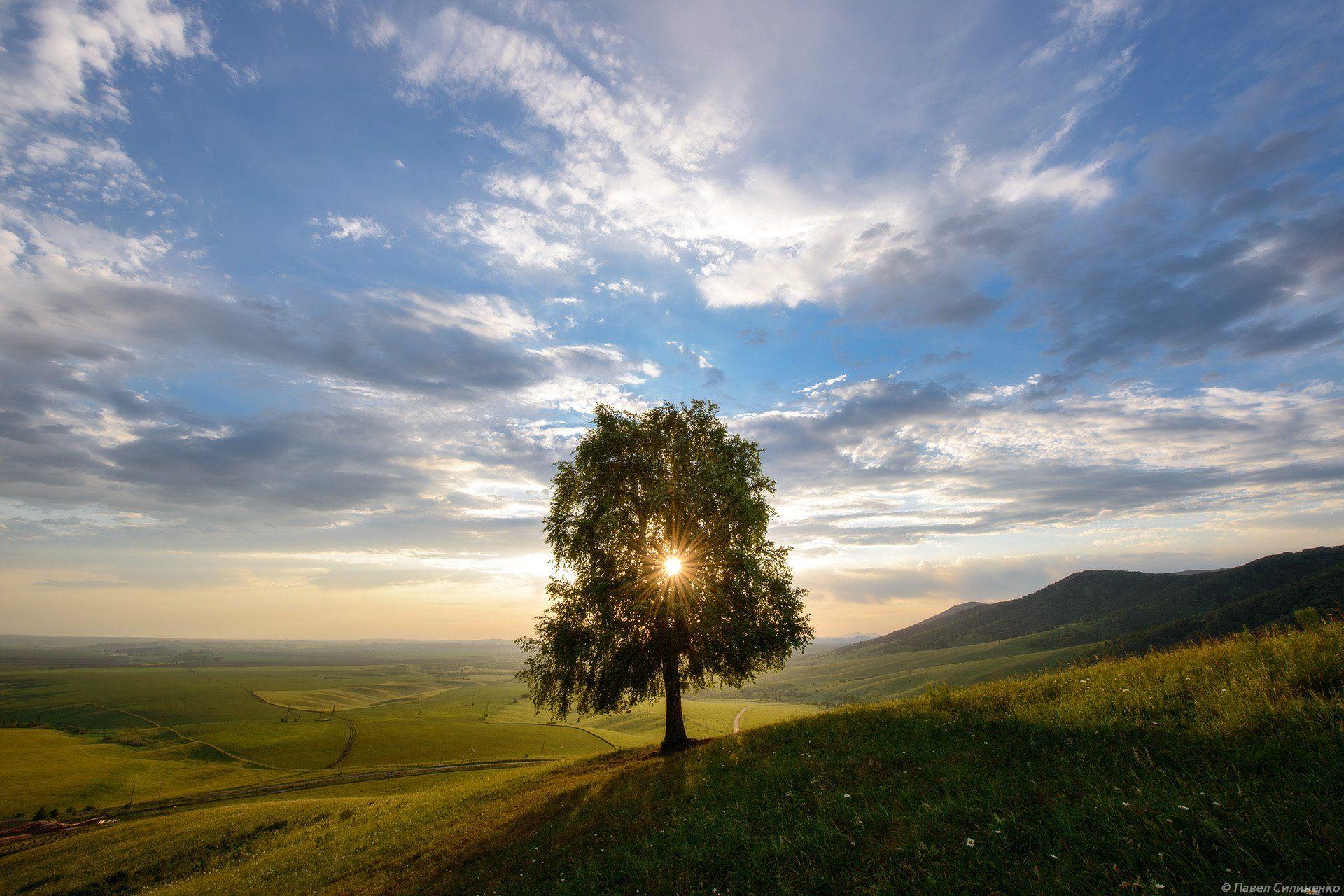 алтай, белокуриха, утро, солнце, долина, одинокое дерево, свет, небо, облака, Павел Силиненко