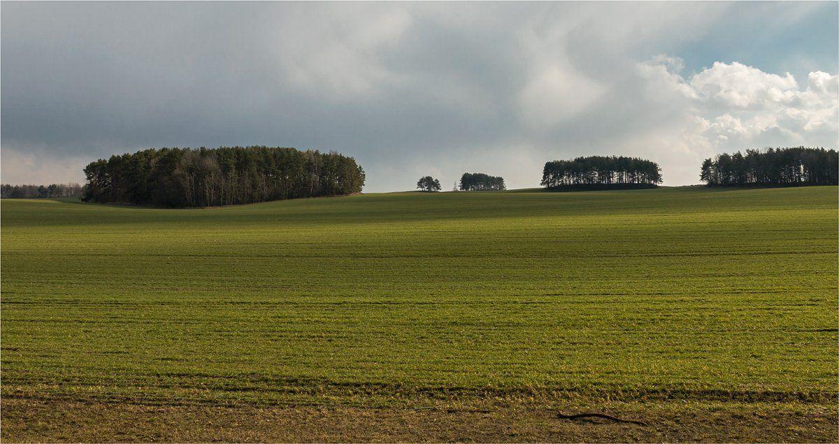 поле, деревья, небо, трава, Куликова Ирина
