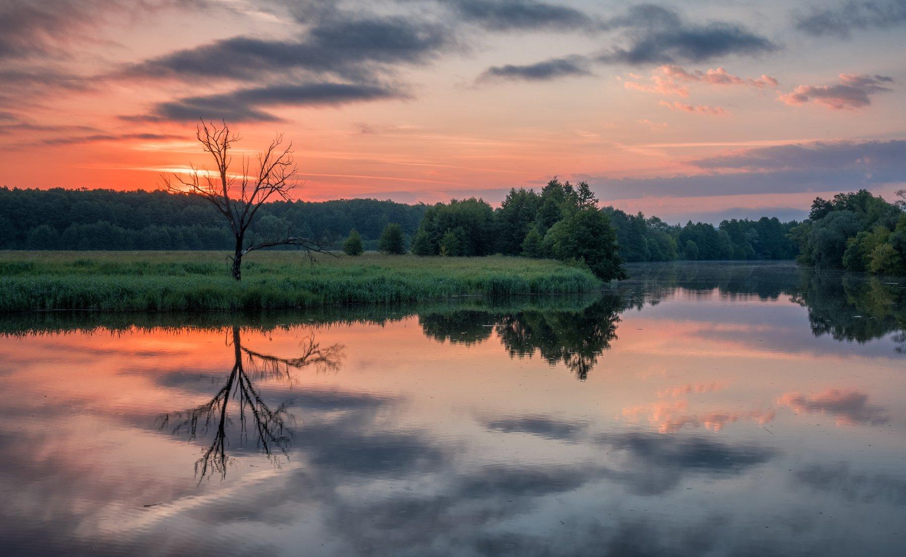 рассвет, пейзаж, природа, утро, река, дерево, небо, Виталий Левыкин