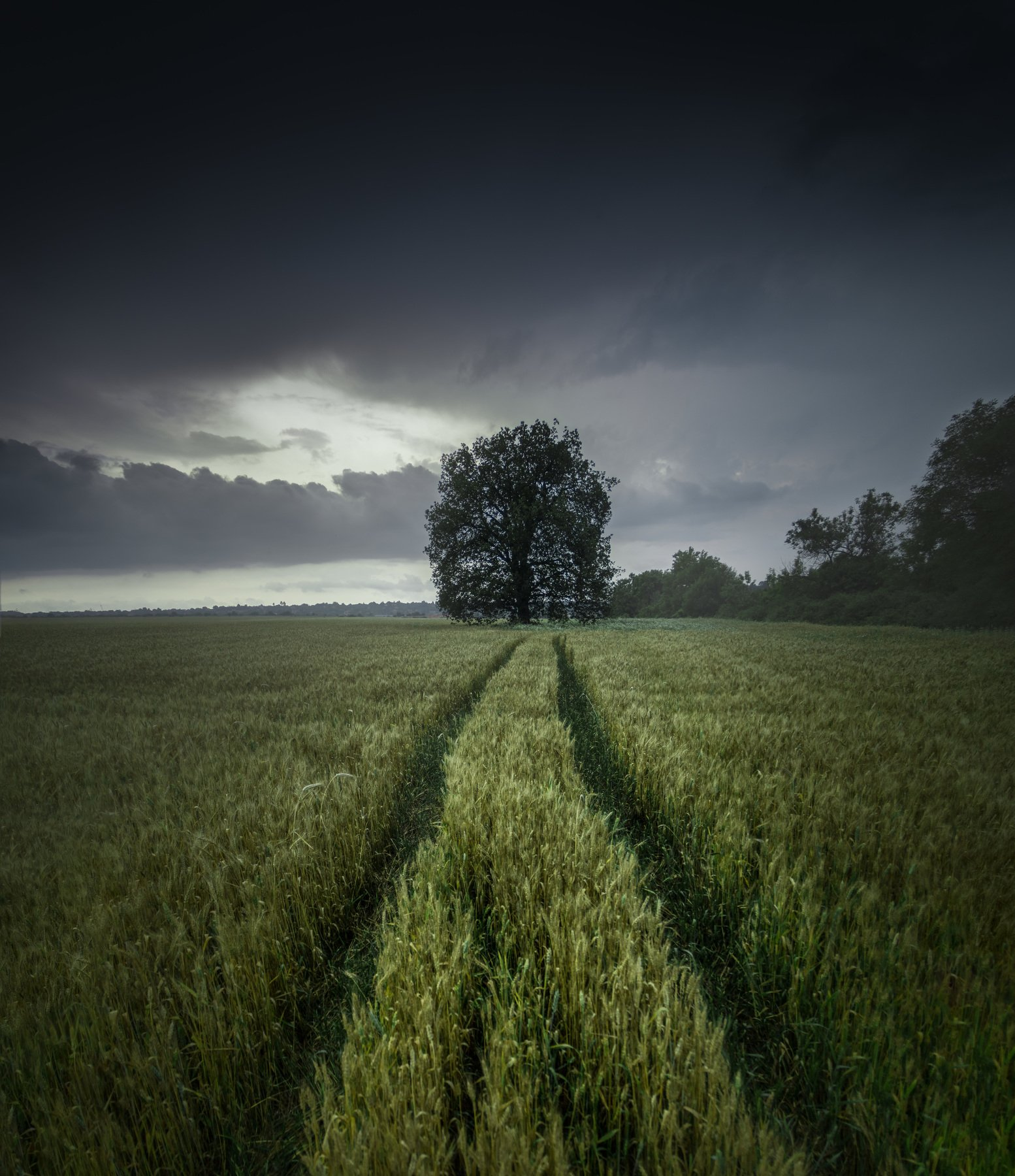 landscape, field, wheat, storm, rain, clouds, sky, grain, barley, bulgaria, tree, moody, dramatic, panorama, nature, spring, green, summer, sunlight, rays, homeland, plain,, Кристиян Младенов