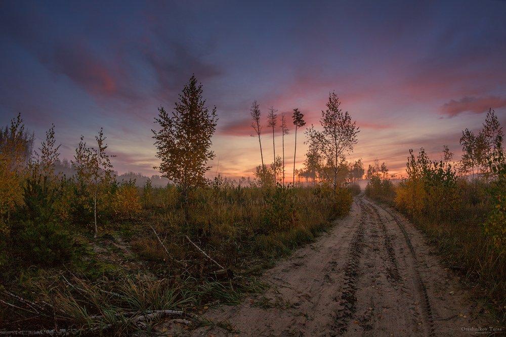 пейзаж,природа,рассвет,дорога,лес,осень,утро,небо,заря, Taras
