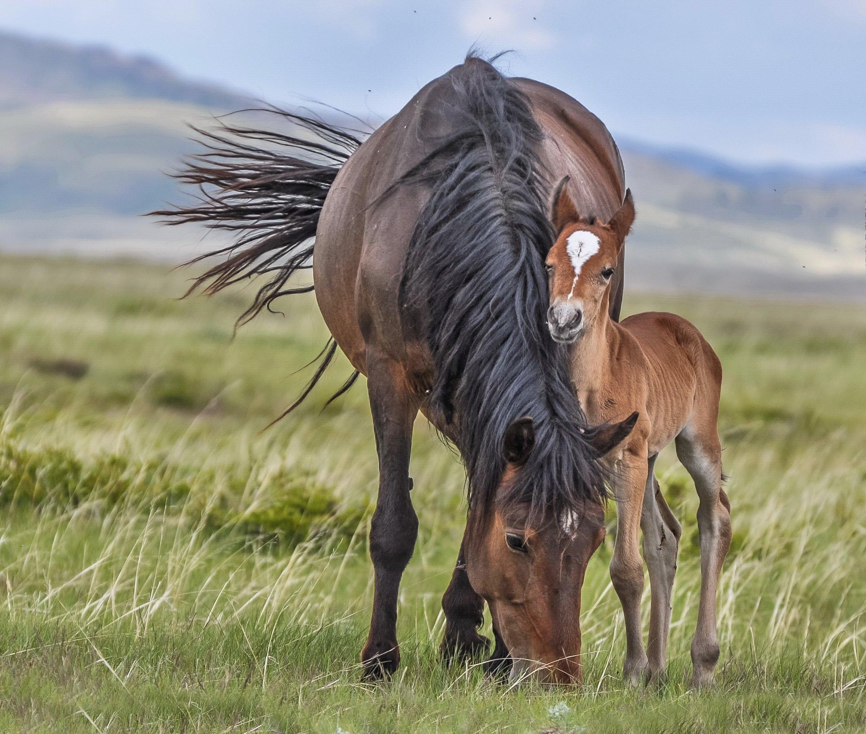 лошадь, Евгений