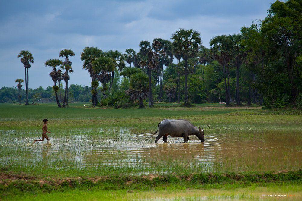 камбоджа, рис, буйвол, мальчик, деревня, пастораль, Макс Ковшов