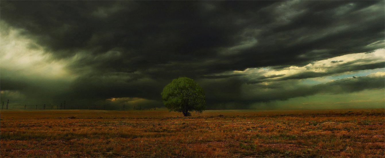 дерево,тучи, SkorovS