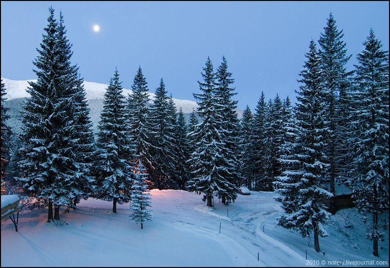 зима, татры, словакия, луна, ели, лес, Nika Shmeleva