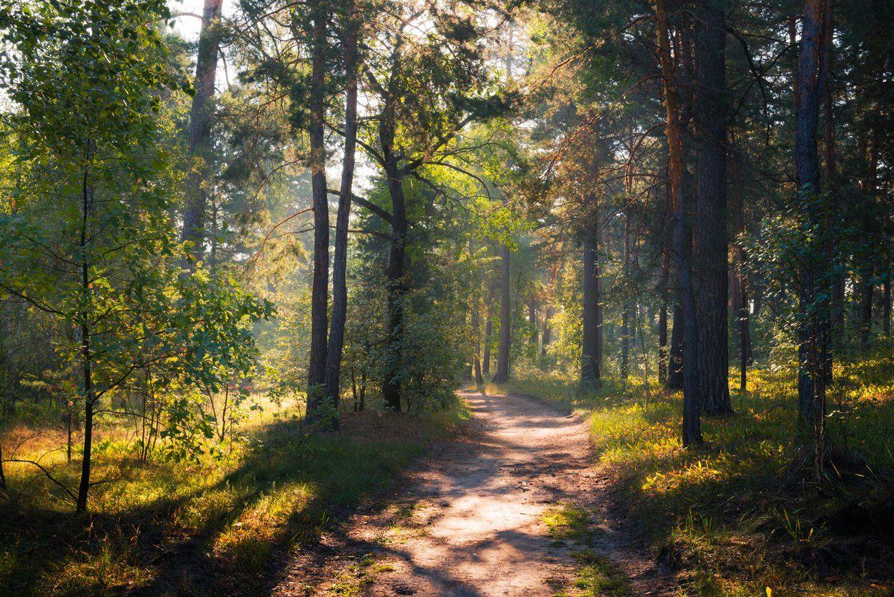 лес, утро, сентябрь, тропа, Галанзовская Оксана