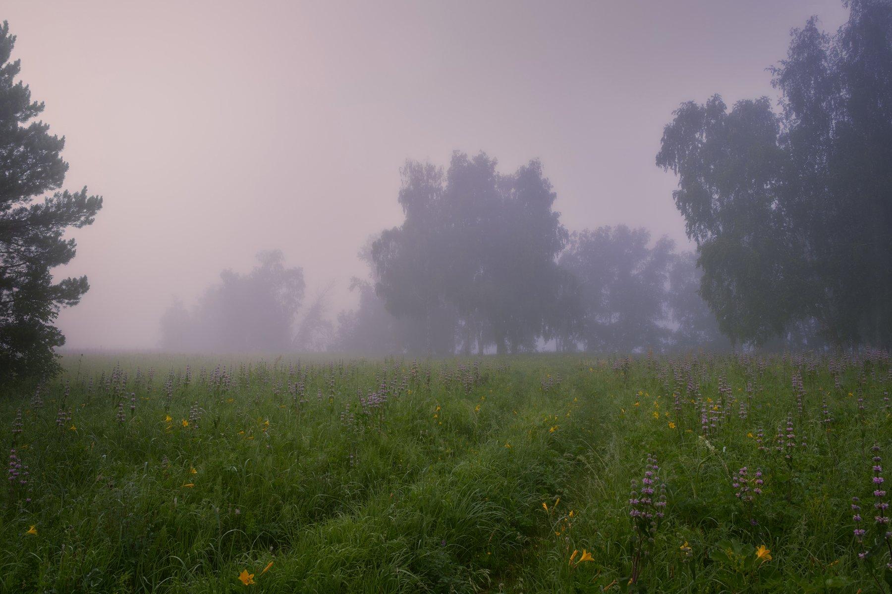 утро,туман,тишина,травы,луга,роса, Сергей