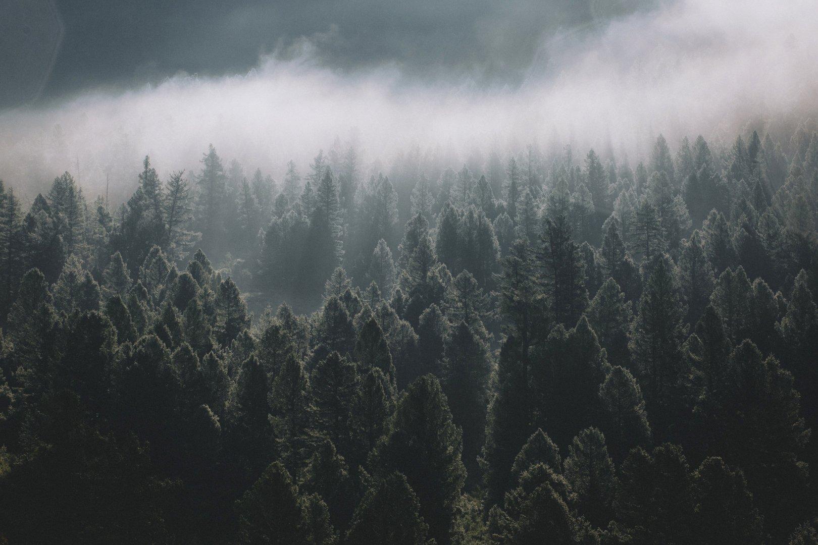 путешествия, тыва, туризм, исследование, пейзаж, горы, лес, хайкинг, туман, сибирь, тайга, Александр Нерозя