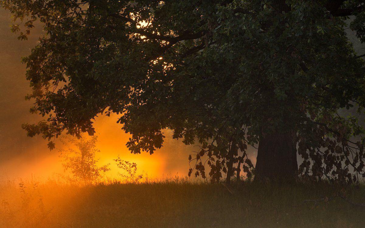 природа утро лето солнце, Корнилов Михаил