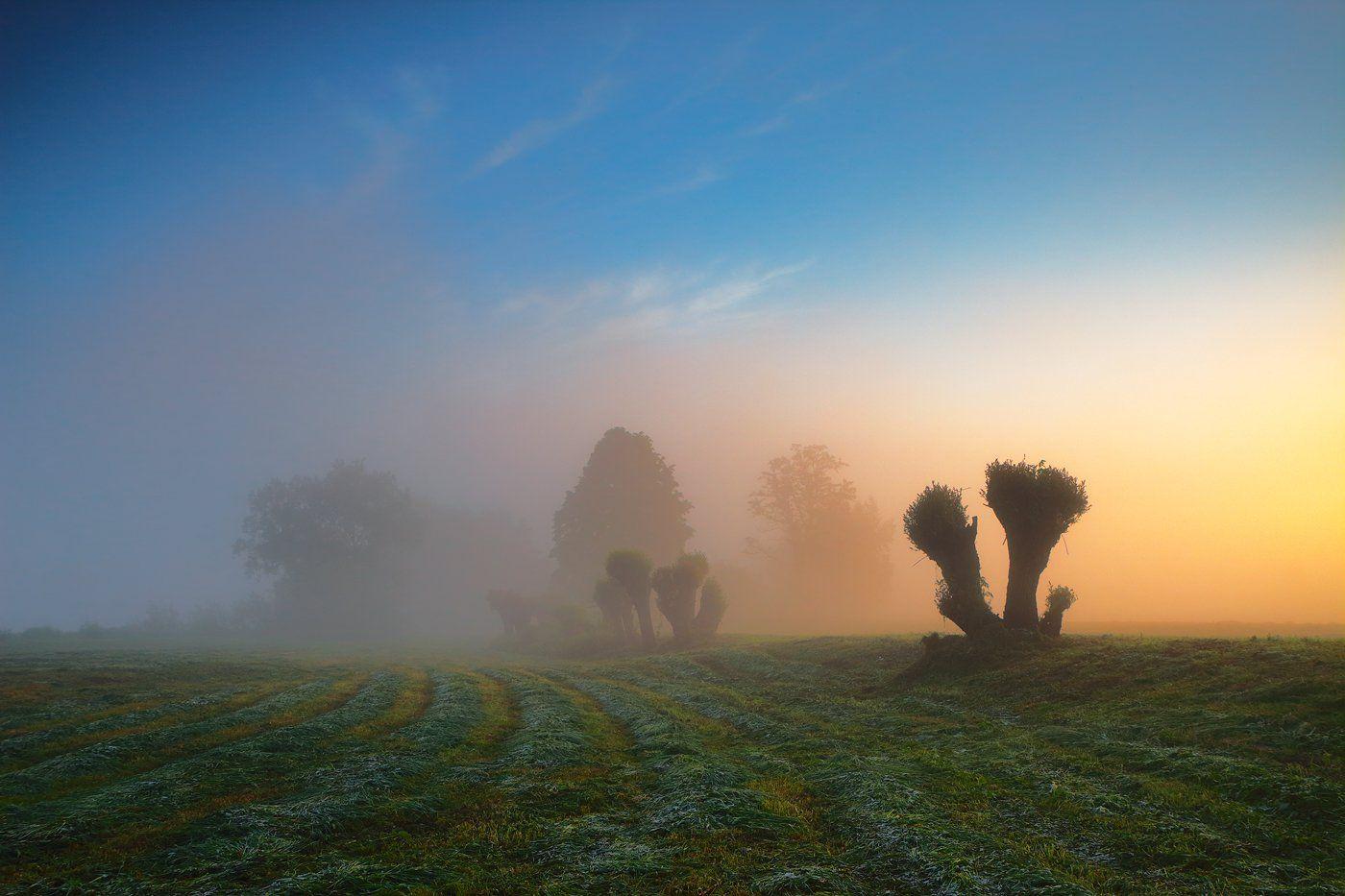 forest, garden, fog, trees, morning, mood, sunrise, Jacek Lisiewicz