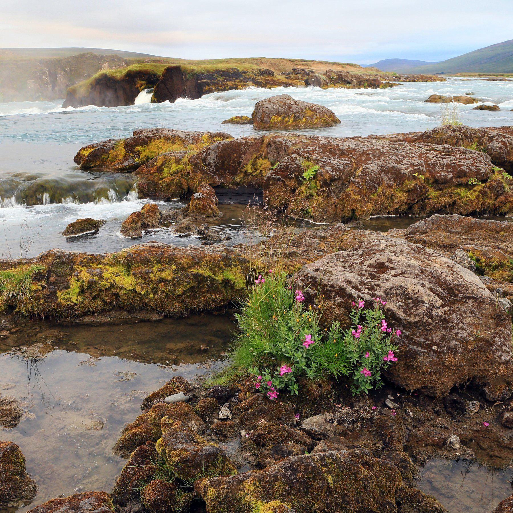#landscape, #travel, #river, #flover, #пейзаж, Михаил Конарев