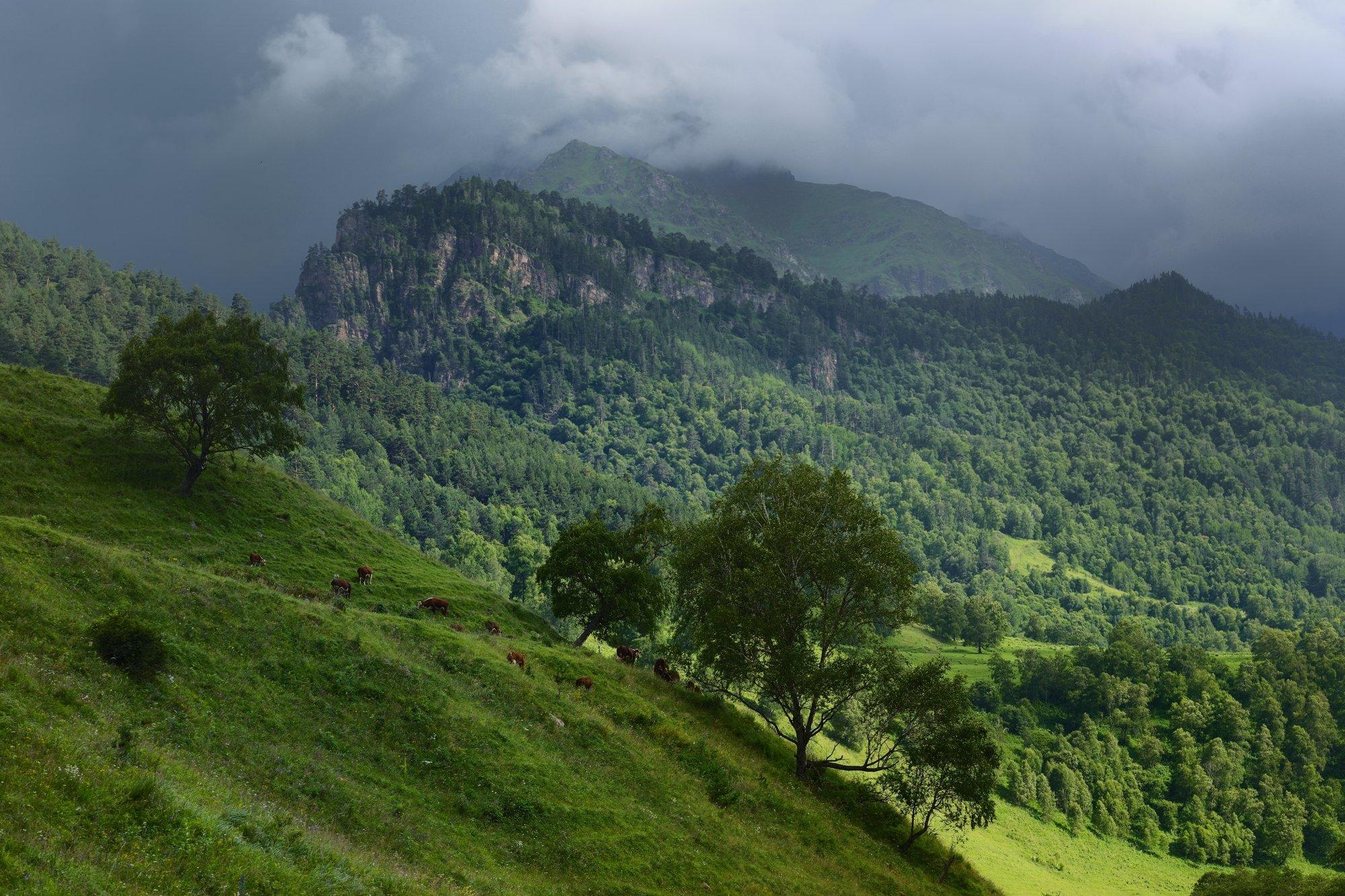 горы лето вечер аксаут, Александр Жарников