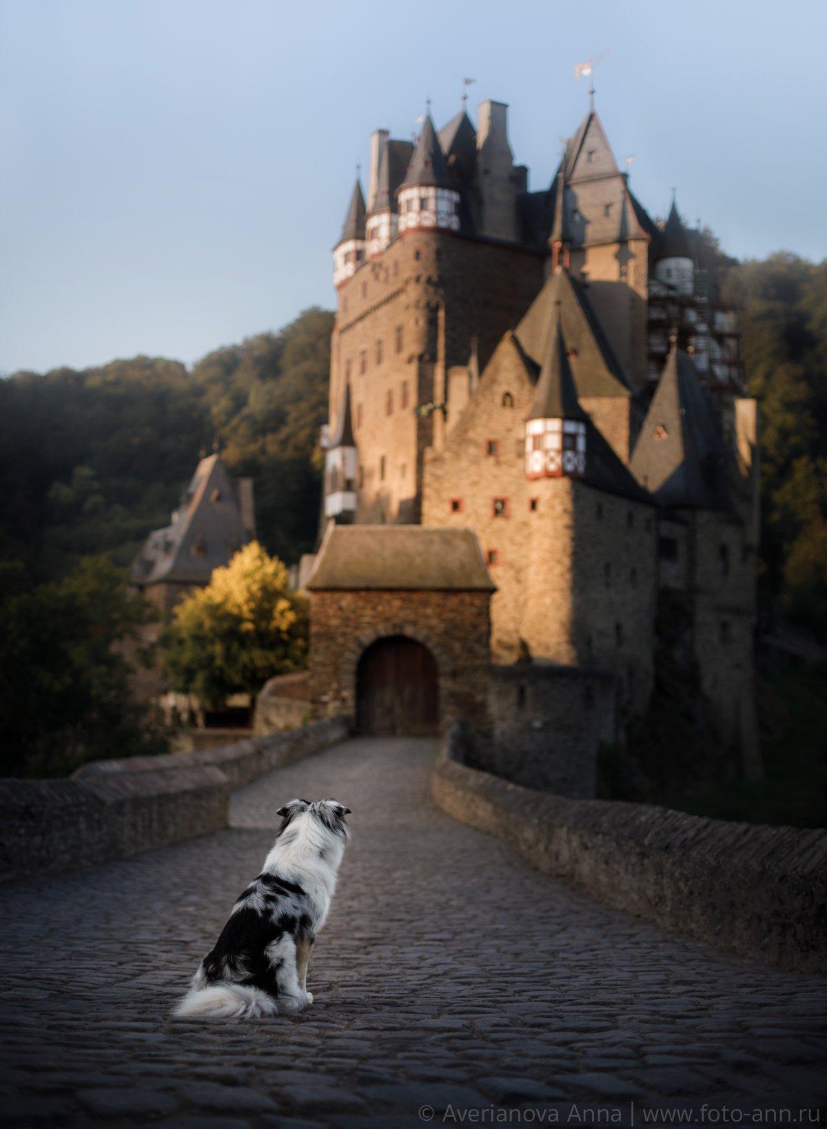 собака, замок, Анна Аверьянова