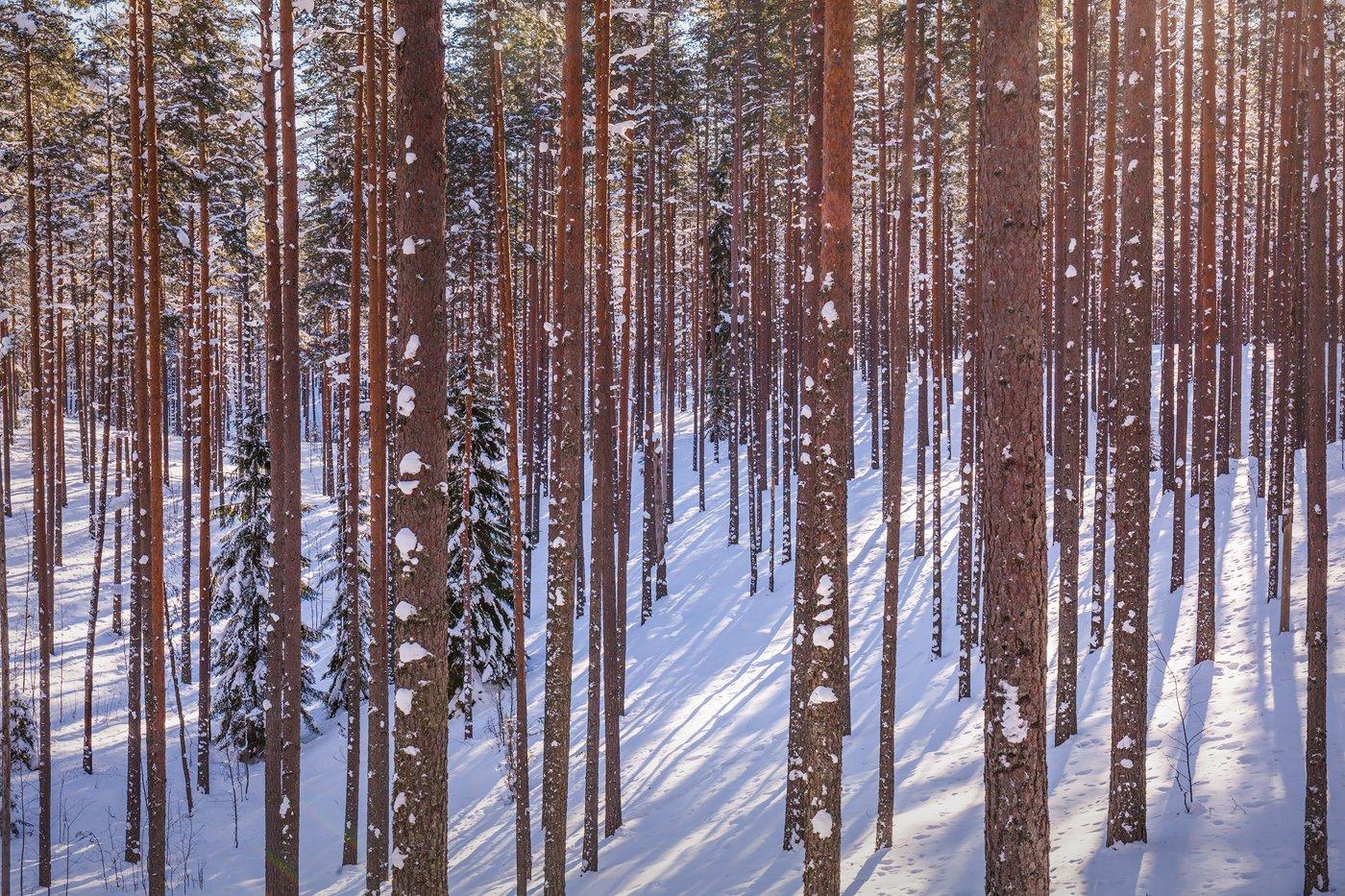 ленинградская область, ленобласть, лес, Арсений Кашкаров