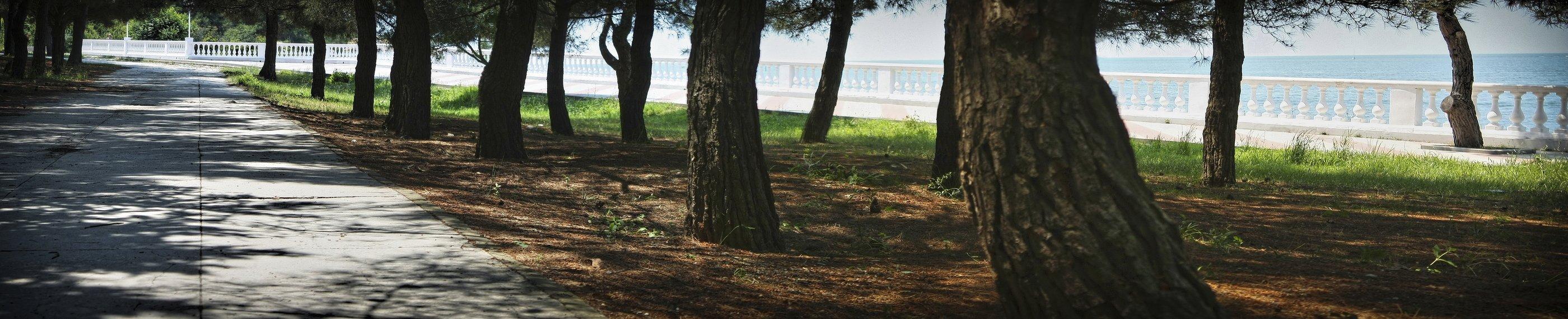 геленджик, набережная, дерево, деревья, лето, парк, Vladimir Kedrov