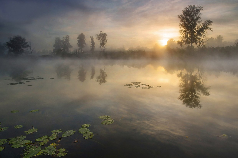 свет, утро, туман, деревья, лучи, солнце, вода, озеро, рассвет, Валерий Чичкин