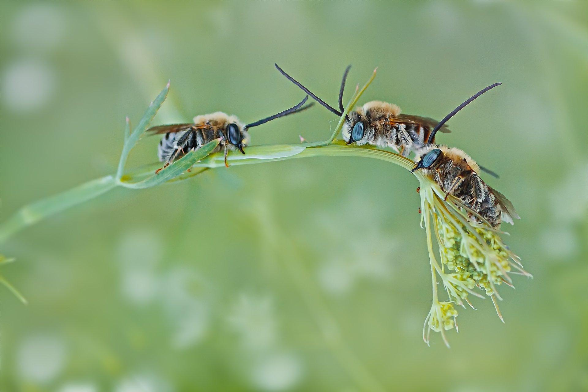 пчела,трава,свет,блики,крылья,жук, Котов Юрий