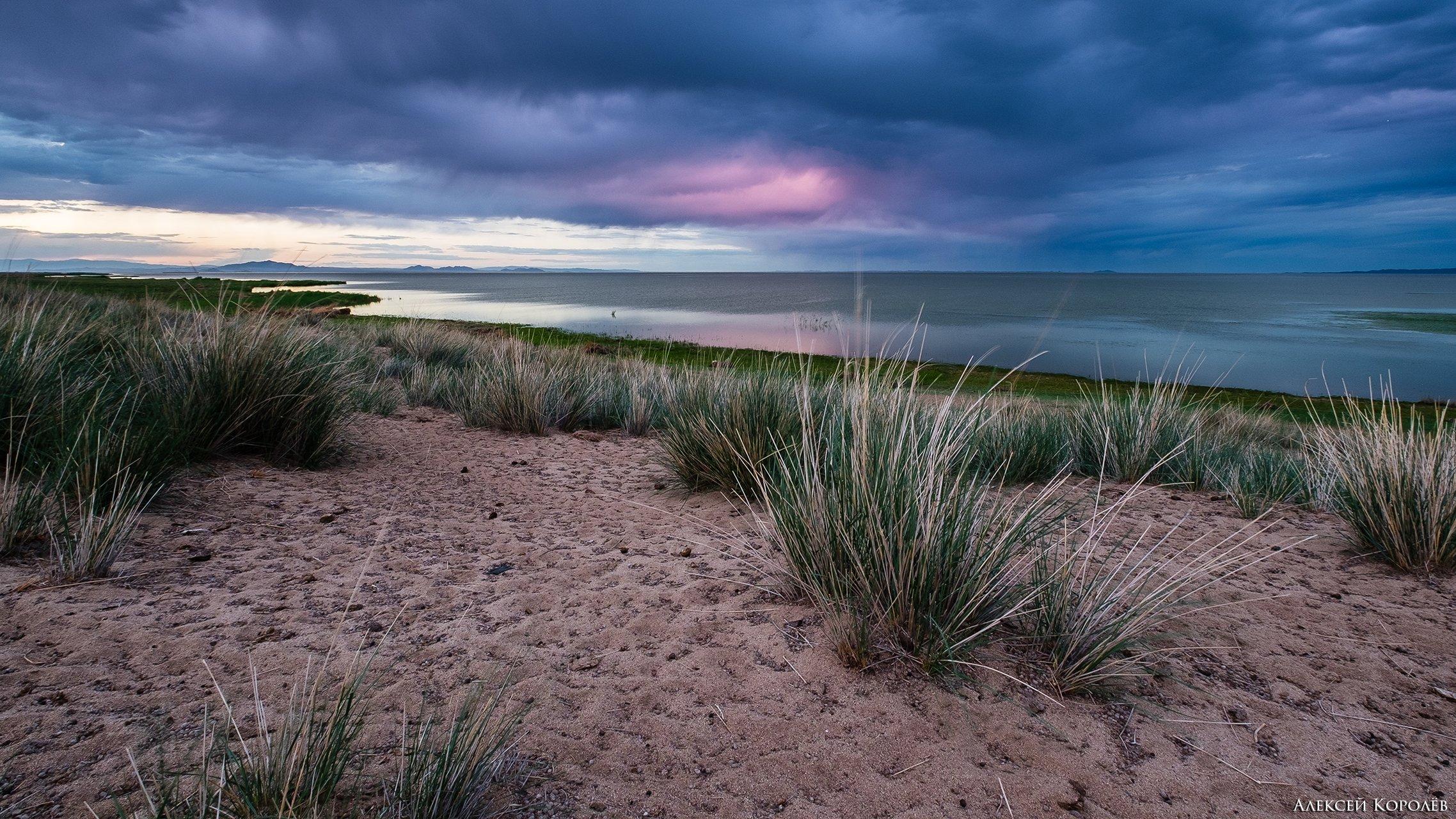 монголия, закат, озеро, песок, ирисы, природа, пейзаж, лето, mongolia, sunset, lake, sand, irises, nature, landscape, summer, Алексей Королёв