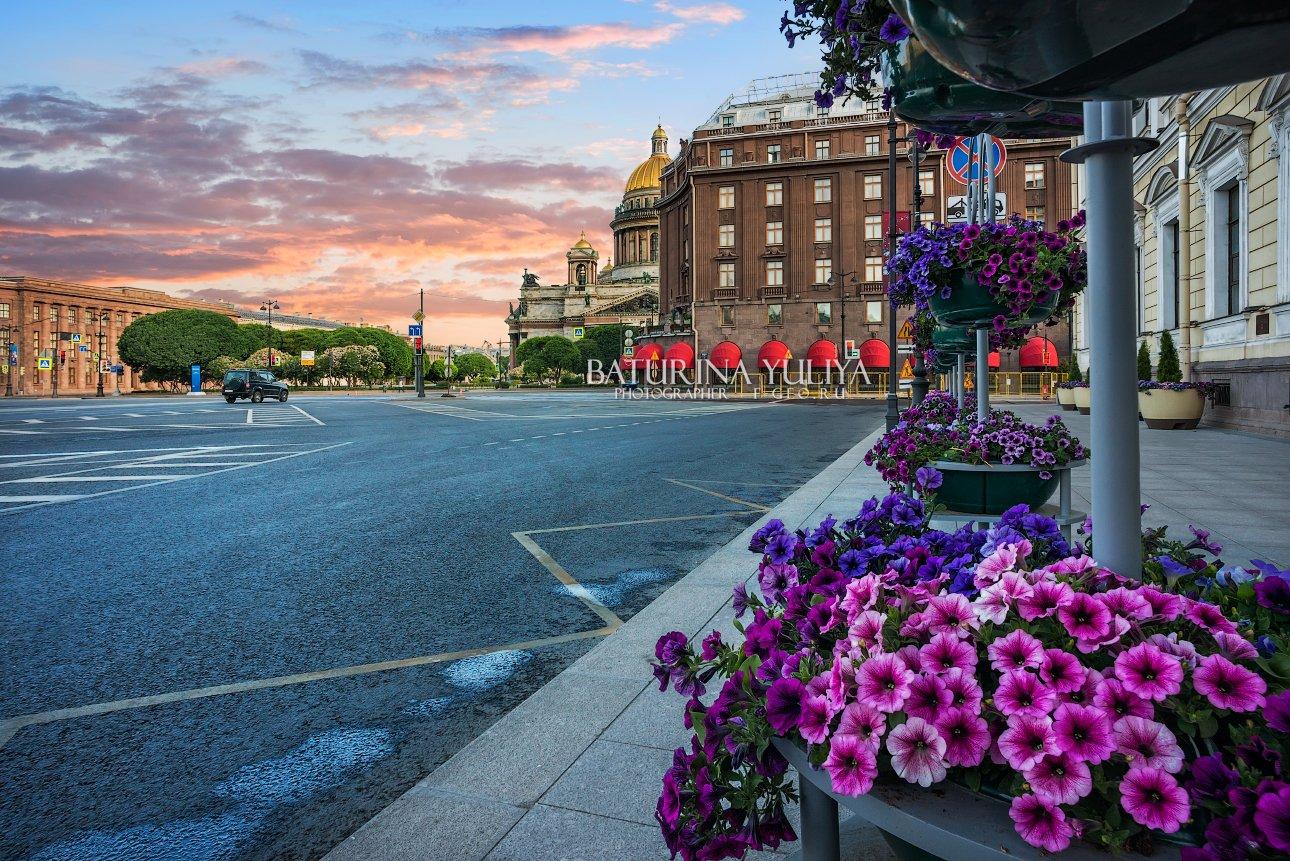 санкт-петербург, цветы, исаакиевский собор, исаакий, площадь, Юлия Батурина