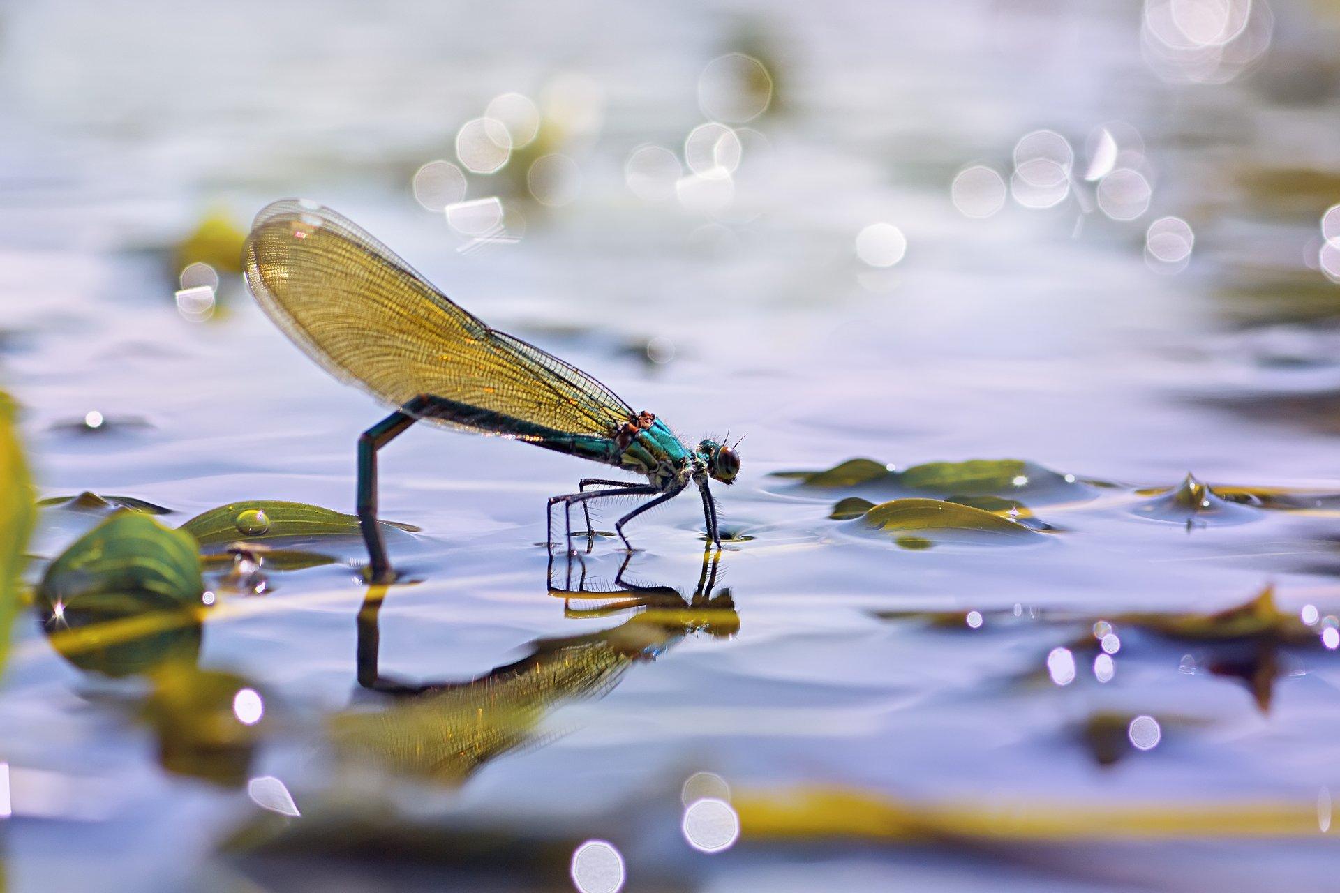 стрекоза,глаза,цвет,свет,лист,насекомое,жук, Котов Юрий