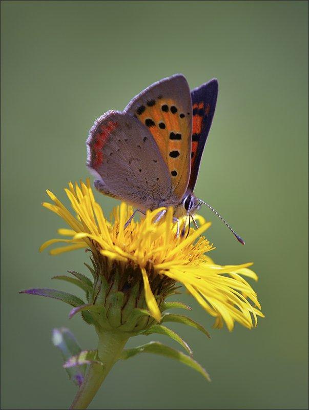 бабочки, Андрей Медведев