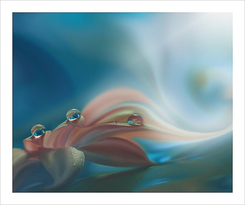 Art, Closeup, Colors, Drop, Fine art, Flower, Garden, Juliana nan, Light, Macro, Nature, Nikon, Reflection, Spring, Water, Water drop, Juliana Nan