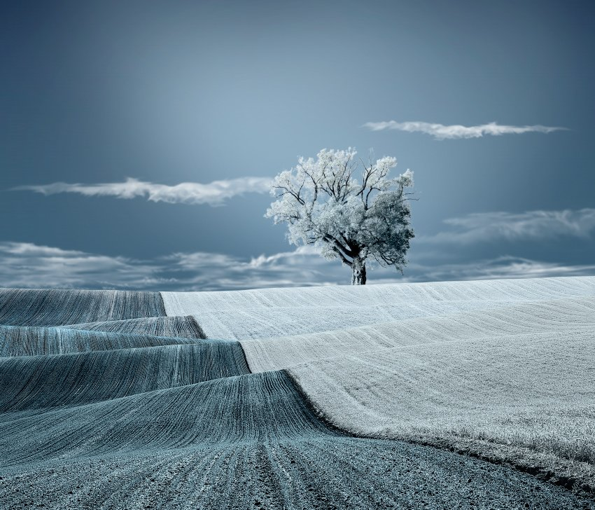 tree, land, grass, ir, clouds, sky, blue, leaf, Caras Ionut