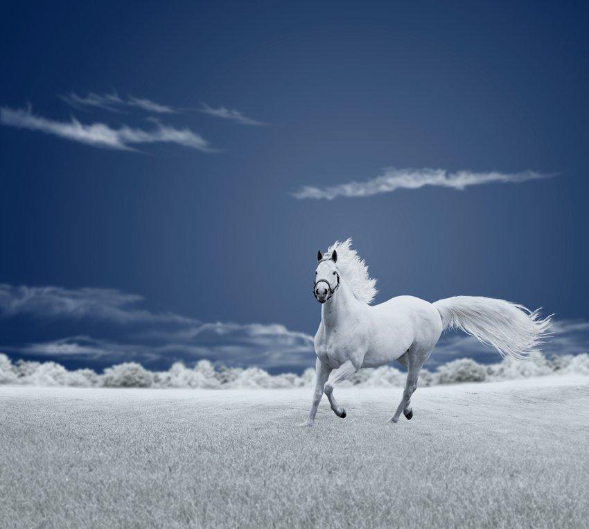 running, sky, ir, clouds, fiels, horse, Caras Ionut