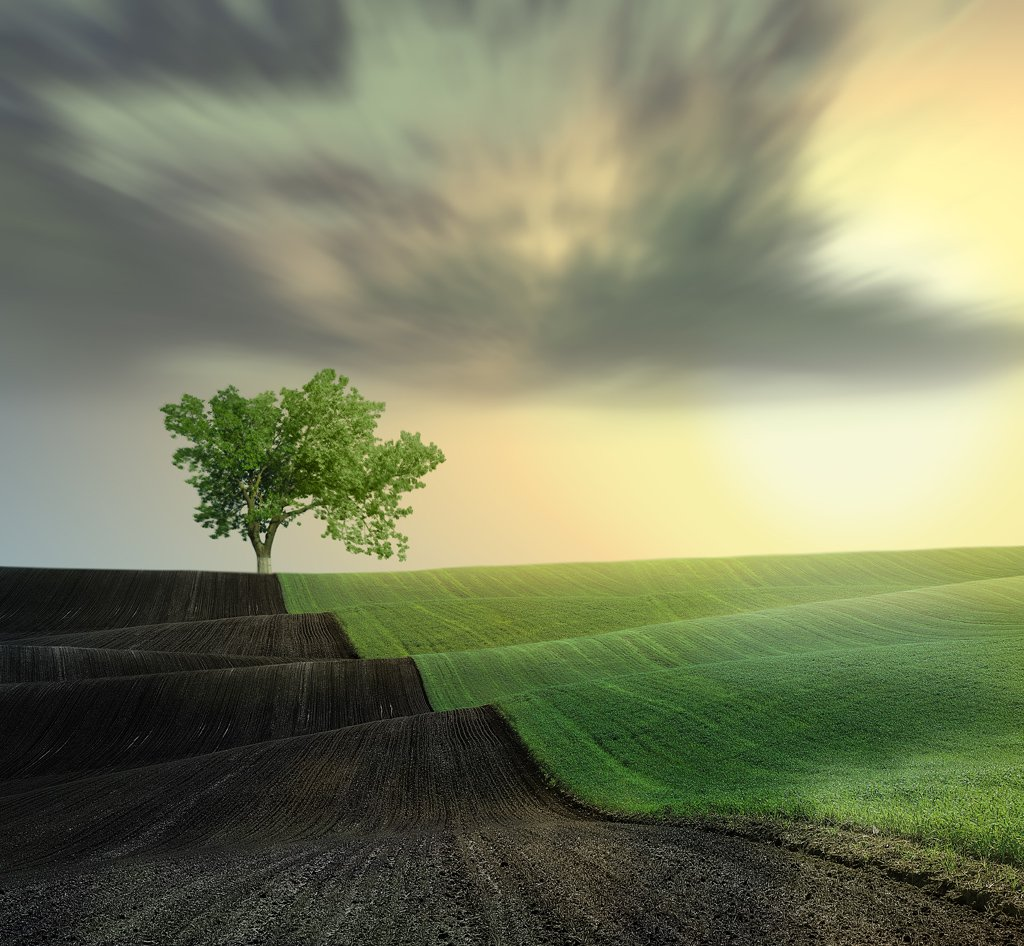 green, yellow, sky, clouds, , grass, land, tree, leaf, Caras Ionut