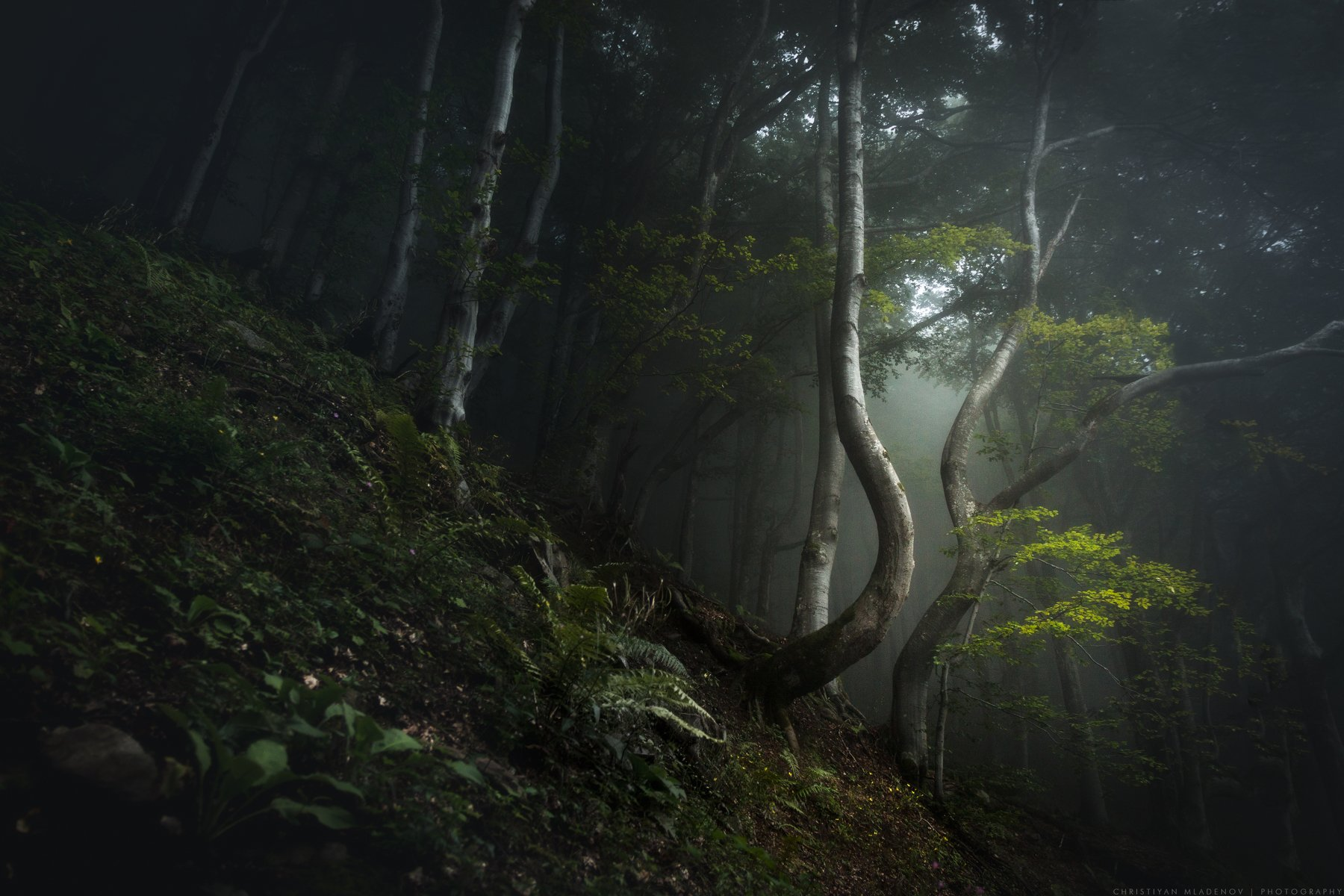 landscape, forest, tree, wide angle, fog, mist, mountain, woods, spring, bulgaria, nature, green, plant, weed, leafs, dream, panorama, woodland, gora, mountain, shapes, bizare, tale, magic, fantasy, Кристиян Младенов