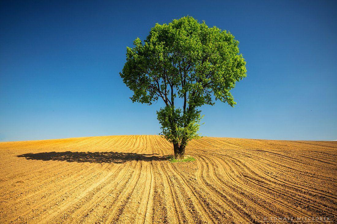 poland, fields, sky, blue, loneliness, polish, landscape, tree, shadow, hot, warm, green, brown, Tomasz Wieczorek