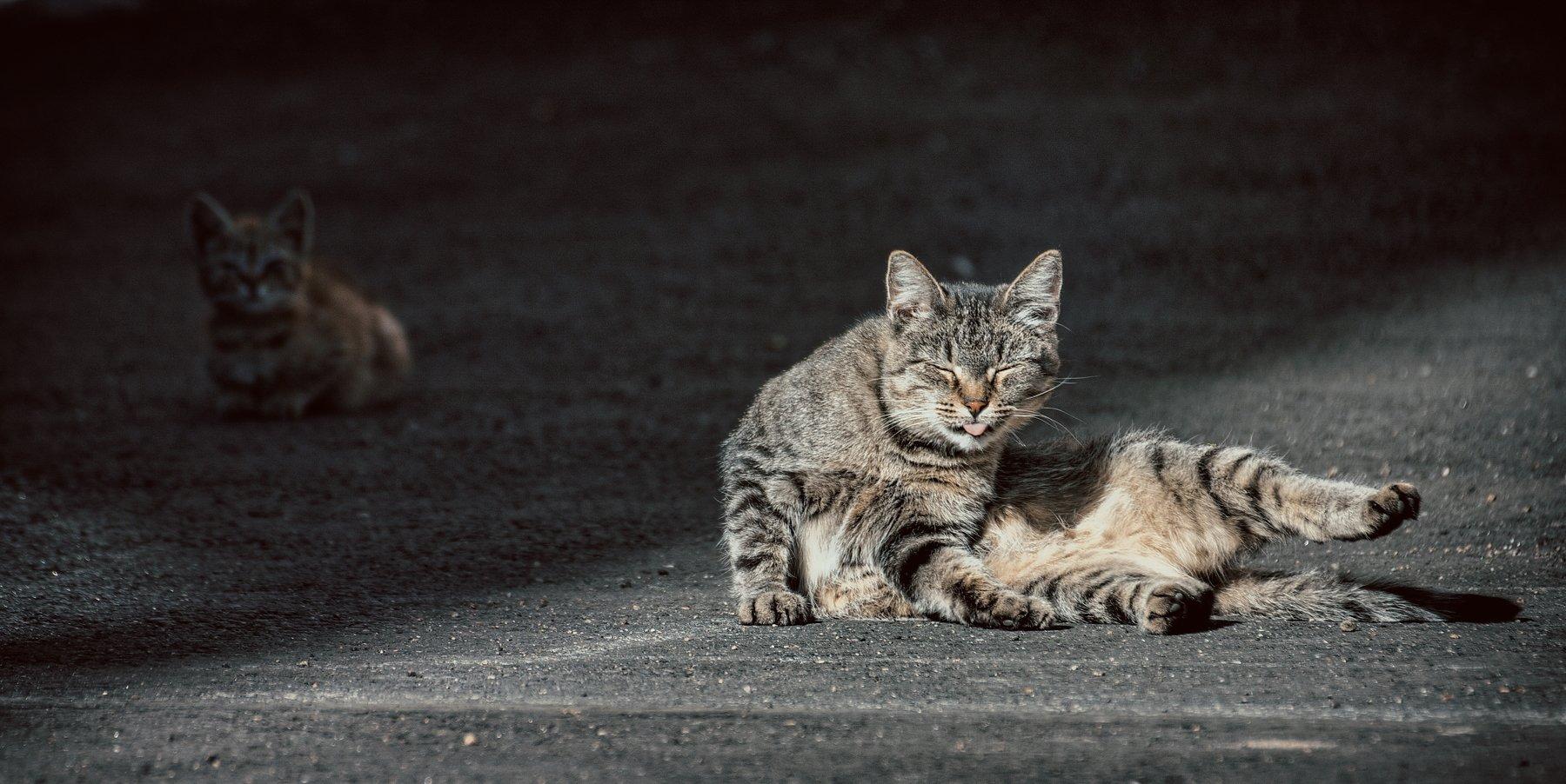 кот, коты, котэ, котёнок, кошка, кошки, Vladimir Kedrov