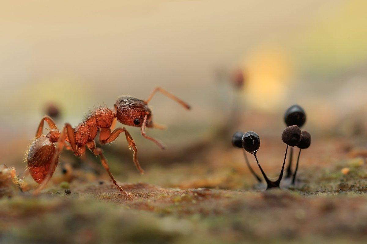муравей, миксомицеты, Валерия Зверева