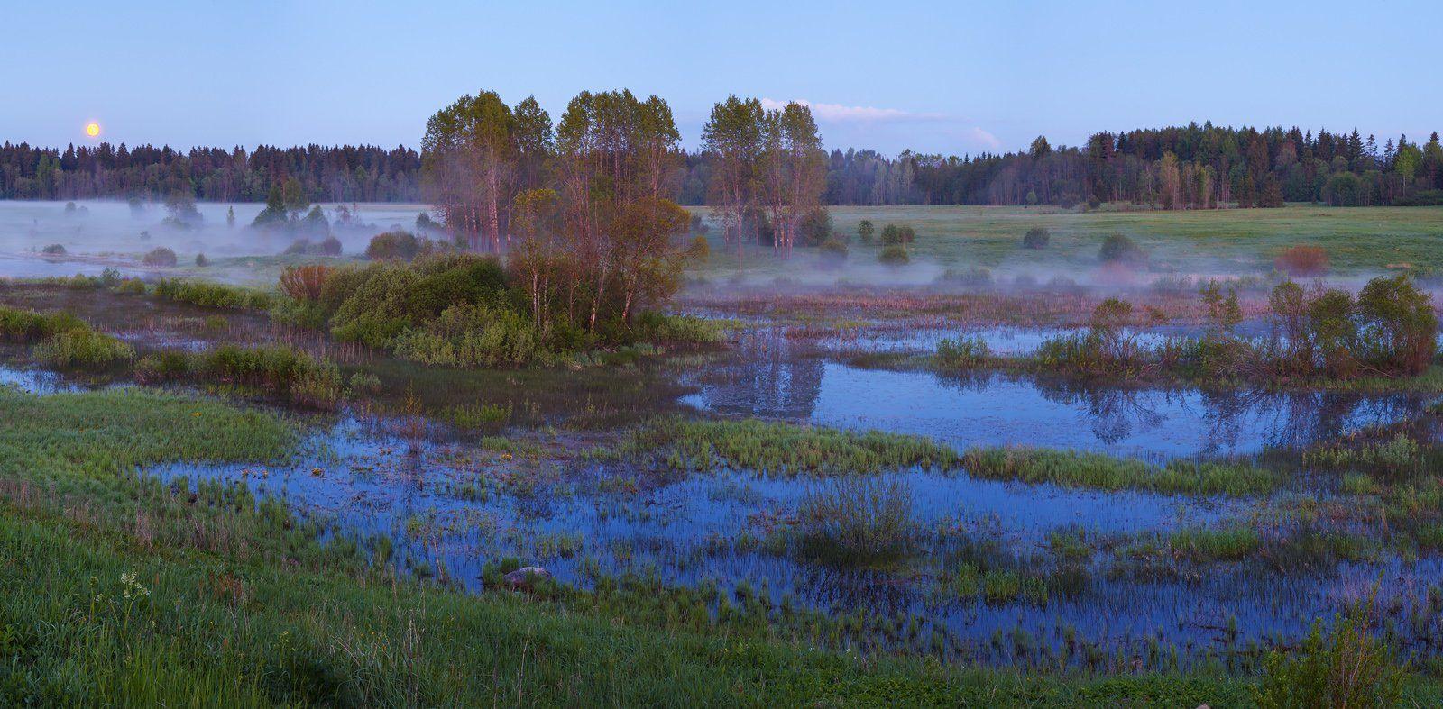 ленинградская область, ленобласть, волосовский район, урочище хюльгюзи, болото, Арсений Кашкаров