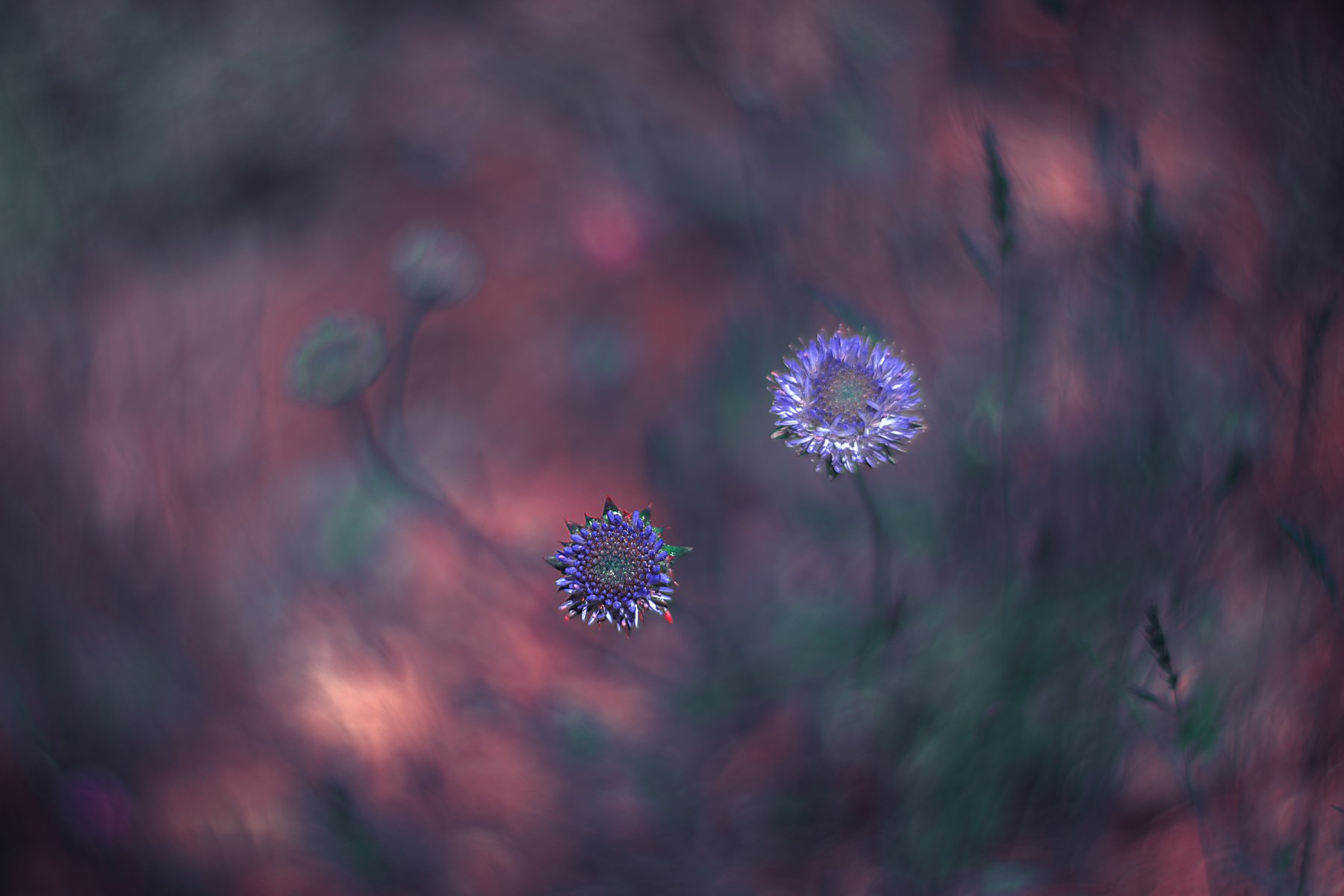 Bokeh,purple,light,pink,green,flowers,nikon,nature,, Борислав Алексиев