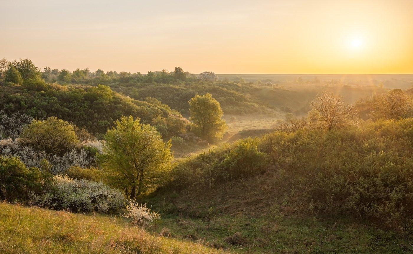 центрально-черноземный заповедник, казацкая степь, курская область, фотопроект, май, Арсений Кашкаров