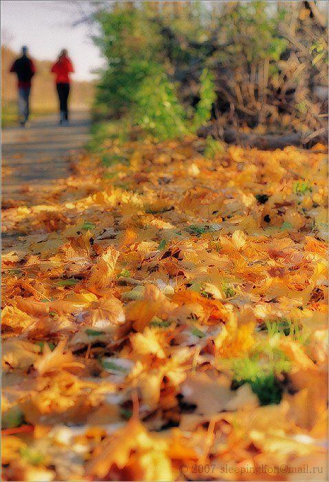 pilgrim, пейзаж, пленка, 35 мм, mamiya nc1000, Pilgrim