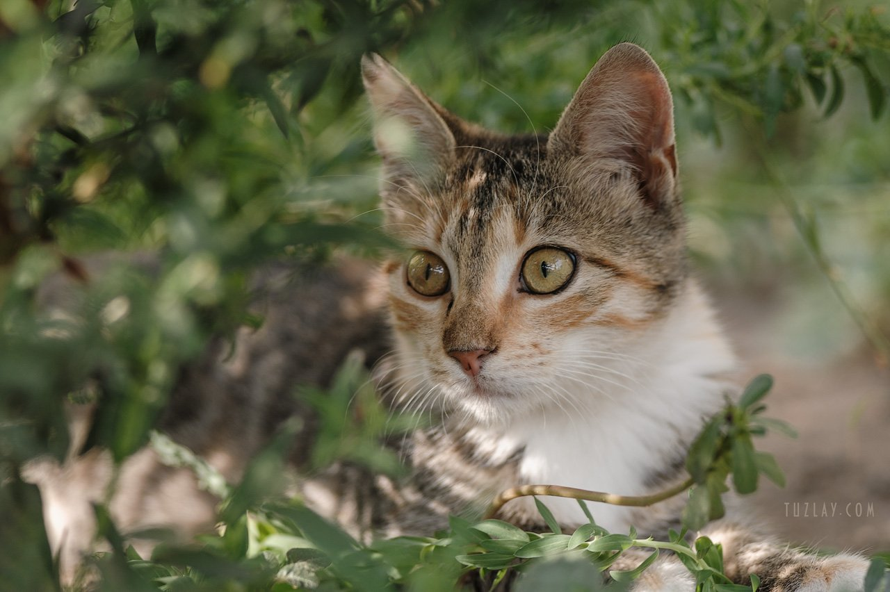 котик, котейка, кошки, юпитер 21м, усатик, кото-фото, котёнок, Владимир Тузлай