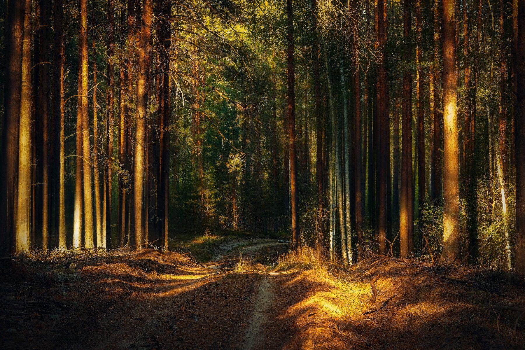 фото, природа, пейзаж, лес, лето, закат, Екатерина