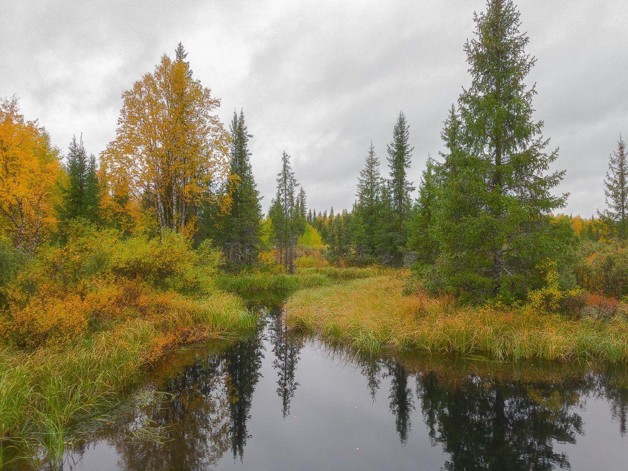 печора,коми,лес,осень,золотая,мобильноефото, Игорь Подобаев