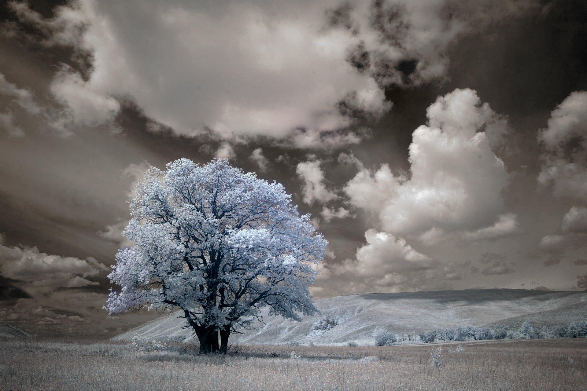 инфракрасный, пейзаж, дерево, небо, облака, Олег_Грачёв, Грачёв Олег