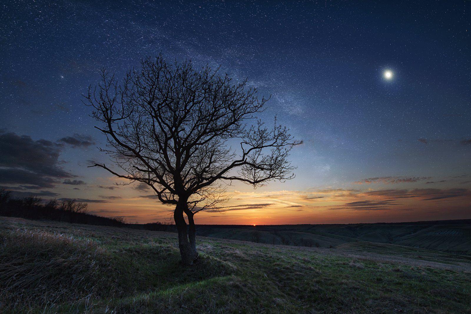 закат, ночь, дерево, холмы, звезды, калач-на-дону, волгоградская область, пейзажная фотография, богомолов, doberman