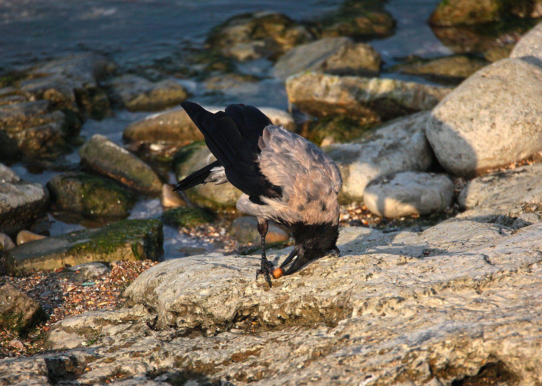 птица,птицы,природа,ворона, Марат Магов