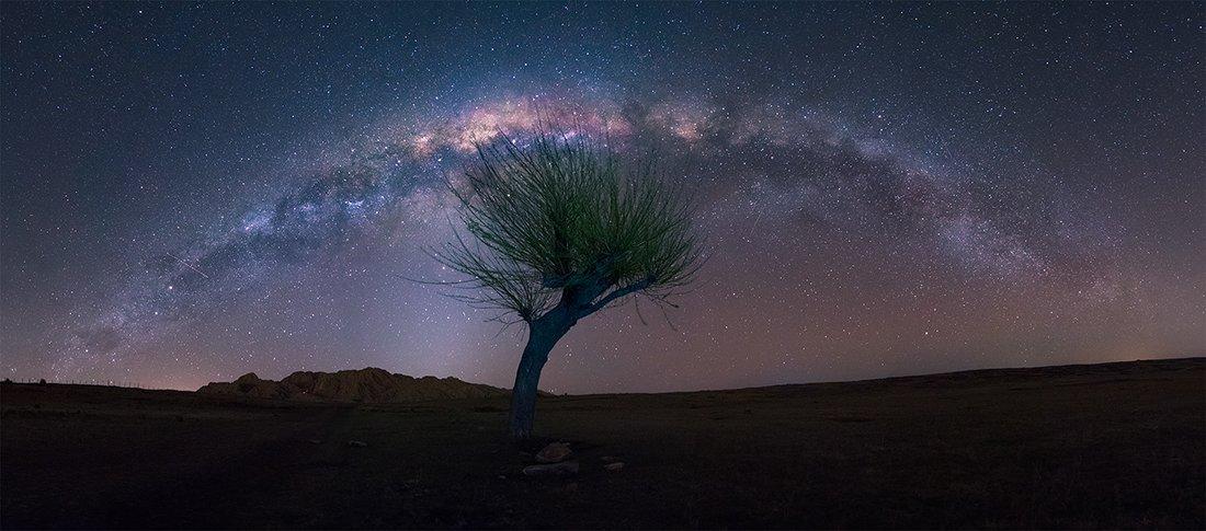 trees, Gonzalo Javier Santile